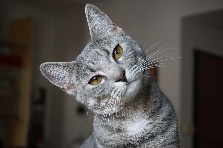 Comment aider son chat à utiliser sa litière ?