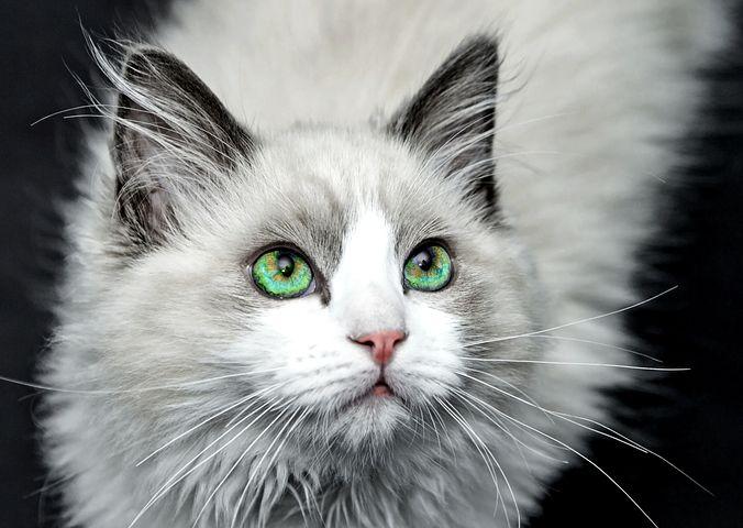 Peut-on empêcher un chat de griffer ?