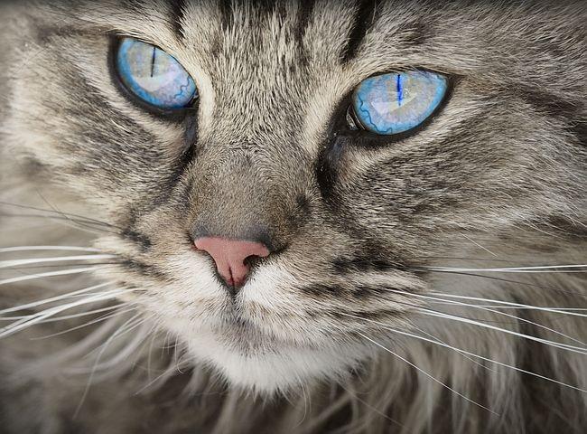 Comment reconnaître un problème de comportement chez son chat ?