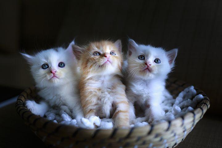 Comment favoriser une bonne cohabitation d'un chat avec un enfant ?