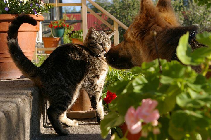 La cohabitation entre un chat et un chien