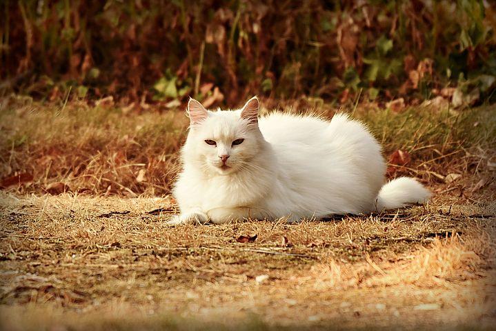 Peut-on prendre un chat si l'on a un jardin ?